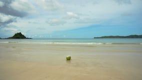 在沙子海滩的绿色椰子 股票录像