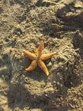 在沙子的一个海星 免版税库存图片