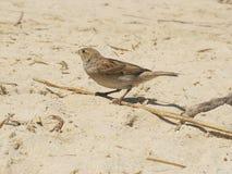 在沙子的一只活鸟有侧视图 免版税库存图片