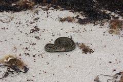 在沙子的一条蛇 库存图片