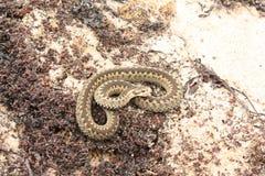 在沙子的一条蛇 免版税图库摄影