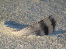 在沙子的一根羽毛 免版税库存图片