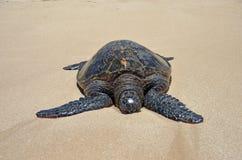 在沙子的乌龟 免版税库存照片