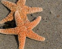在沙子的二个红色海星 库存图片