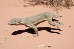 在沙子的动物模型 免版税库存照片