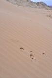 在沙子的动物foothpath 免版税图库摄影