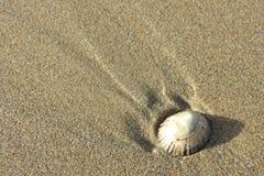在沙子的唯一壳 免版税图库摄影