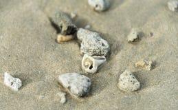 在沙子的壳在海滩 免版税库存照片