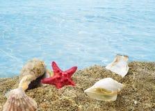 在沙子的壳在清楚的水下 免版税库存图片