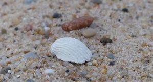 在沙子的壳在福兹做Arelho海滩 免版税图库摄影