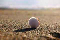 在沙子的壳横跨海 库存图片