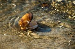 在沙子的壳由波浪洗涤了 免版税图库摄影