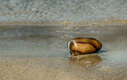 在沙子的壳由波浪洗涤了 图库摄影