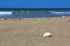 在沙子的壳 库存图片