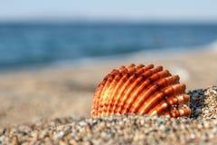 在沙子的壳 免版税库存图片