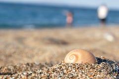 在沙子的壳 图库摄影