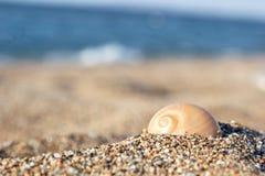 在沙子的壳 库存照片