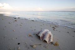 在沙子的大壳在日出 免版税库存图片