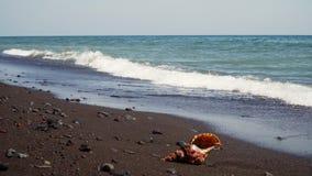 在沙子的大贝壳 股票录像