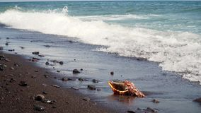 在沙子的大贝壳 股票视频