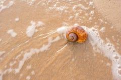 在沙子的大贝壳在海滩 库存照片