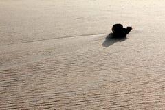 在沙子的孤立对象 库存图片