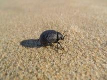 在沙子的宏观黑甲虫 免版税库存照片