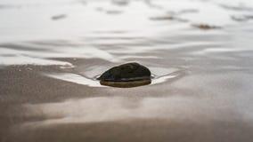 在沙子的小岩石 库存照片