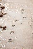 在沙子的小狗 免版税库存图片