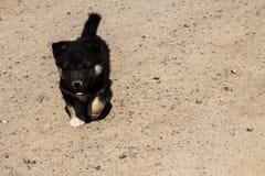 在沙子的小的小狗奔跑 免版税库存图片