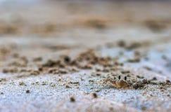 在沙子的小螃蟹 库存照片