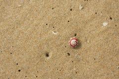 在沙子的巧克力精炼机壳 图库摄影