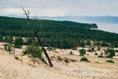 在沙子的干燥倾斜的树 库存照片