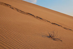 在沙子的干燥分支 免版税库存照片