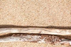 在沙子的干燥分支 库存图片