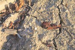 在沙子的干燥叶子 库存照片