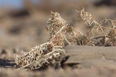 在沙子的干燥黄色草 免版税库存图片