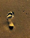 在沙子的日落脚印 免版税库存照片