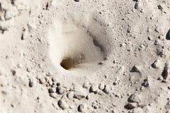 在沙子的昆虫陷井 库存图片