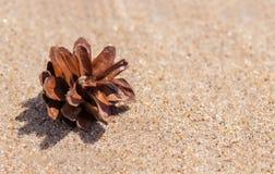在沙子的杉木锥体 库存照片