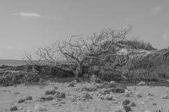 在沙子的树 免版税库存照片