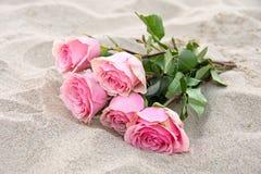 在沙子的桃红色玫瑰 图库摄影