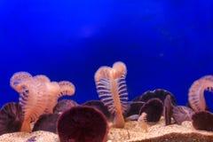 在沙子的桃红色珊瑚 库存照片