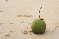 在沙子的椰子-印度,海滩 免版税库存图片