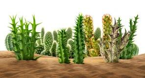 在沙子的沙漠植物 免版税库存图片