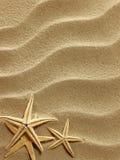 在沙子的海壳 库存照片