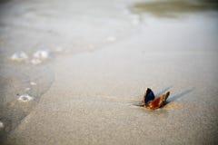 在沙子的海扇壳 免版税库存照片