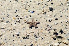 在沙子的海星和海滩壳 图库摄影