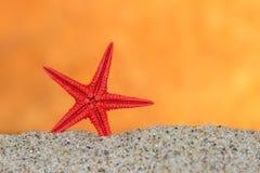 在沙子的海星在日落天空背景  免版税图库摄影