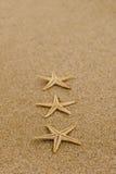 在沙子的海星 库存图片